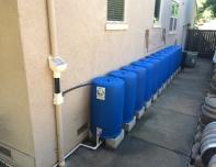 blue barrels rainwater