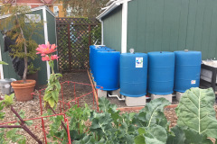 8 Barrels - Windsor Community Garden