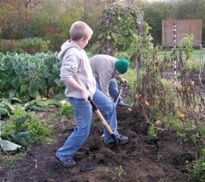 Summer Garden Work
