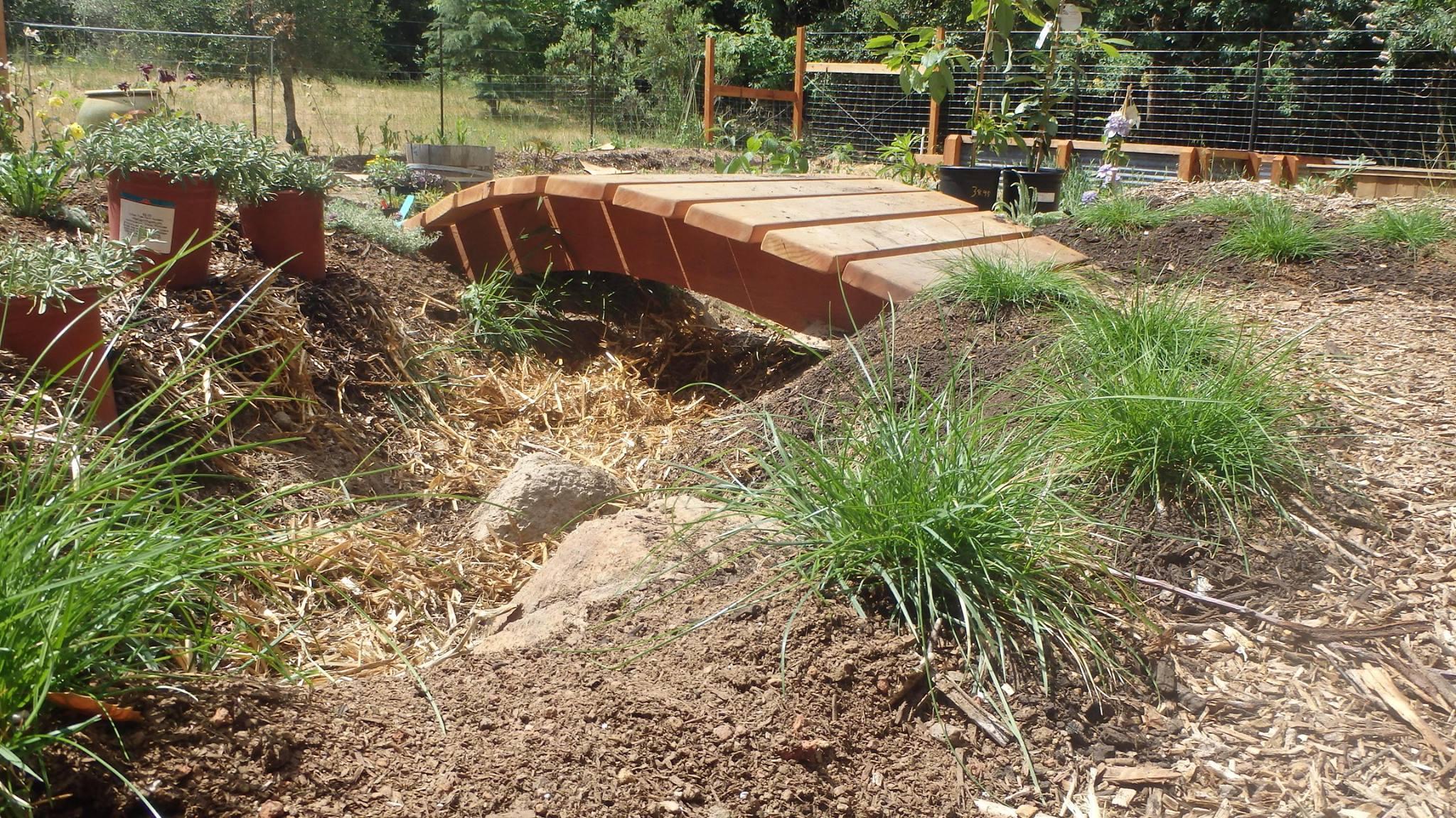What to do with Overflow: Rain Gardens and More! - BlueBarrel ...