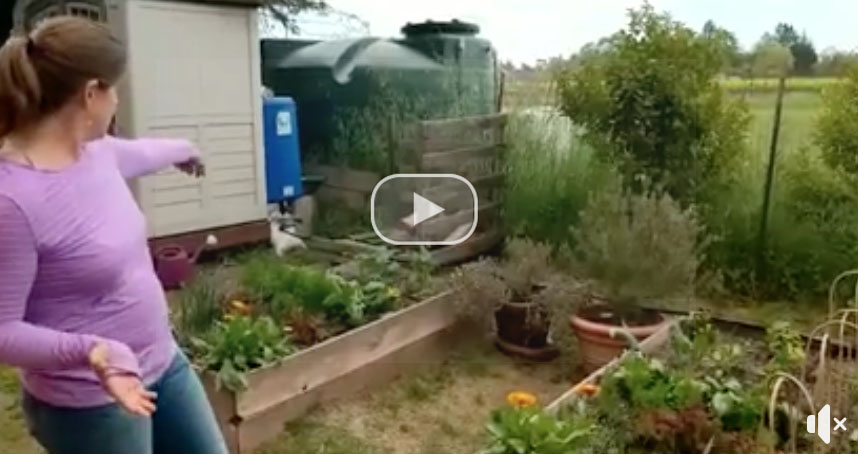 DIY Drip Irrigation System - Irrigate from Rain Barrels by