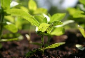 healthy plants and soils