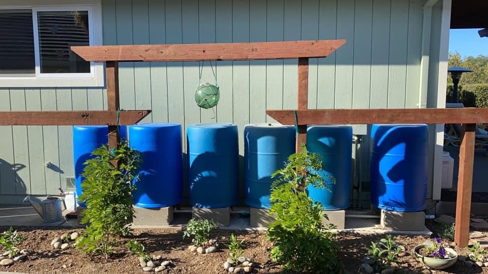 Rain Barrels with Trellis
