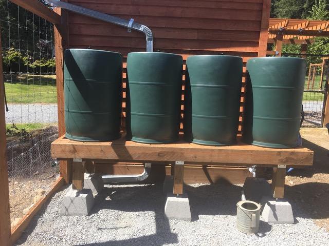Steve's 4-Barrel BlueBarrel Rainwater Catchment System