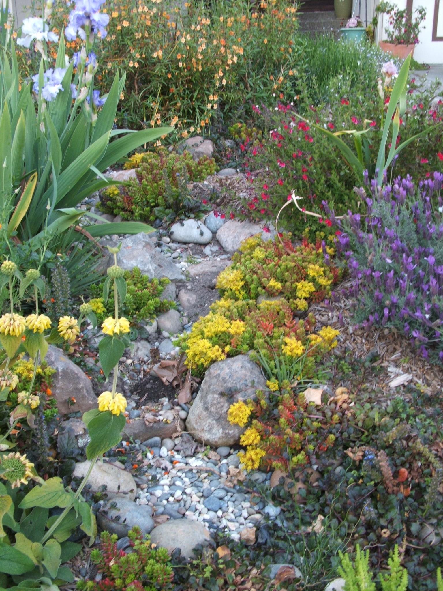 rain garden in monterey bay