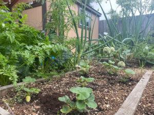vegatable garden