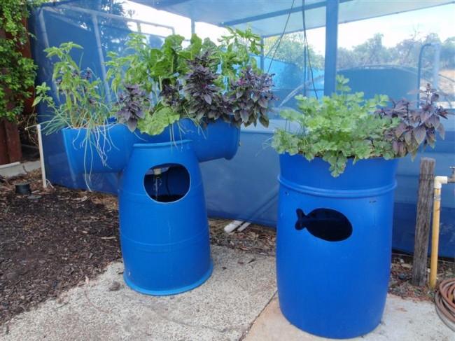 barrels for aquaponics