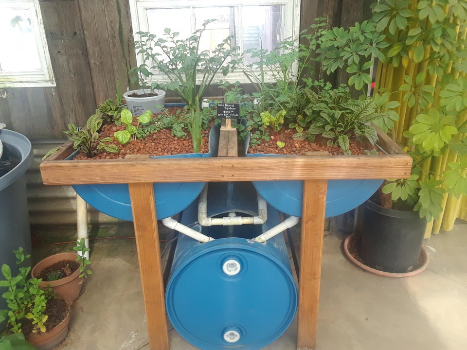 aquaponics with 55 gallon drums